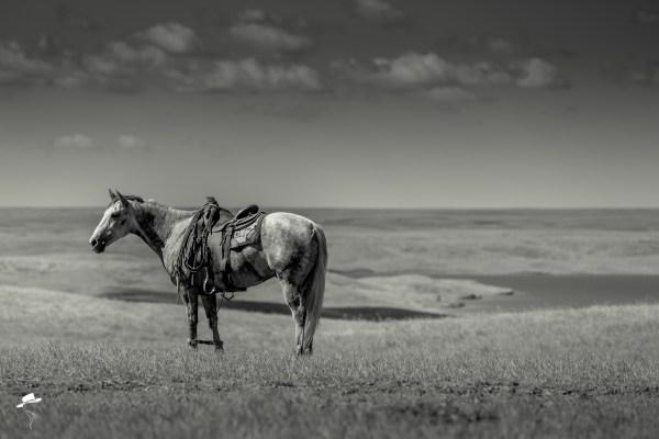 branding photo, south dakota cowgirl photography