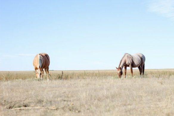 caroline arendt, south dakota cowgirl photography workshop, perry quarter horses
