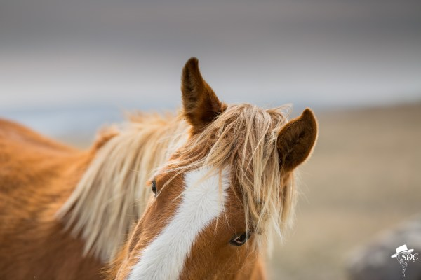 south dakota cowgirl photography, the dx ranch