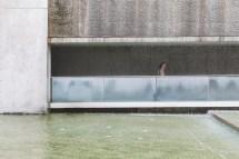 Andy Donohoe Concrete Curves Of Tadao Ando