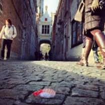 Ebijiro and cobblestones in Brugge.