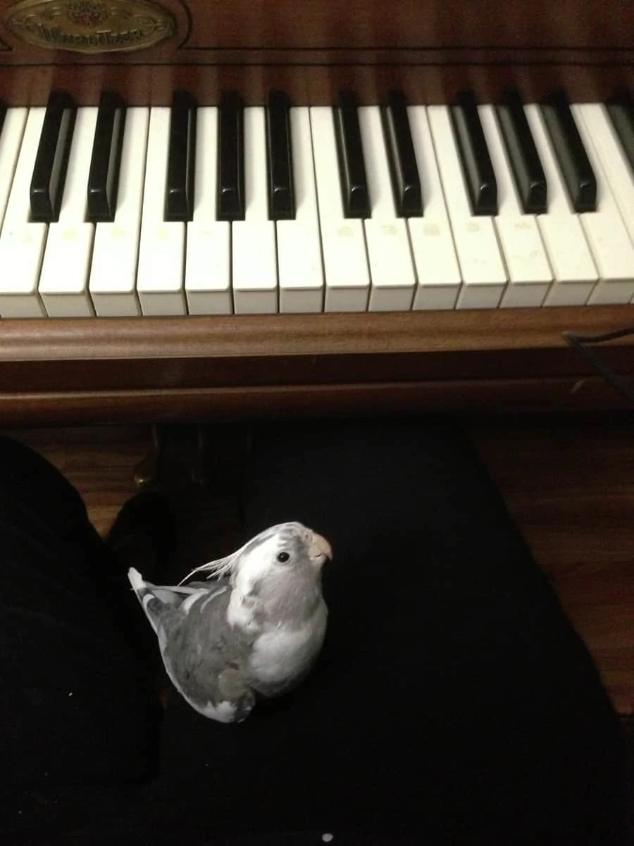 Cosmo's pet anniversary: an ode to our first pet together!   via The Spirited Violet