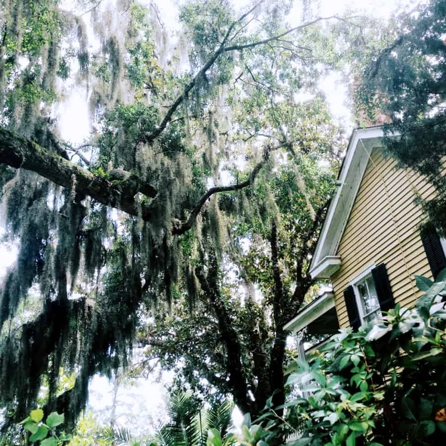 historic downtown Saint Augustine, Florida: sight seeing in the beautiful seaside town of the oldest city in the US! via The Spirited Violet