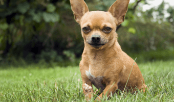 3 Ways To Get Dogs To Stop Barking Instantly