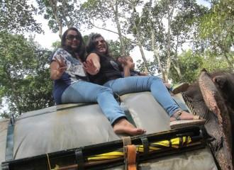 jungle-safari-in-kerala