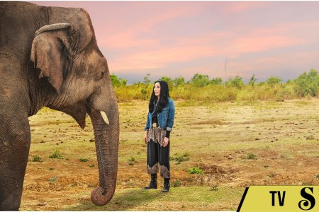 Cher and the Loneliest Elephant