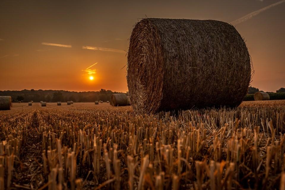 sunrise-3554409_1920