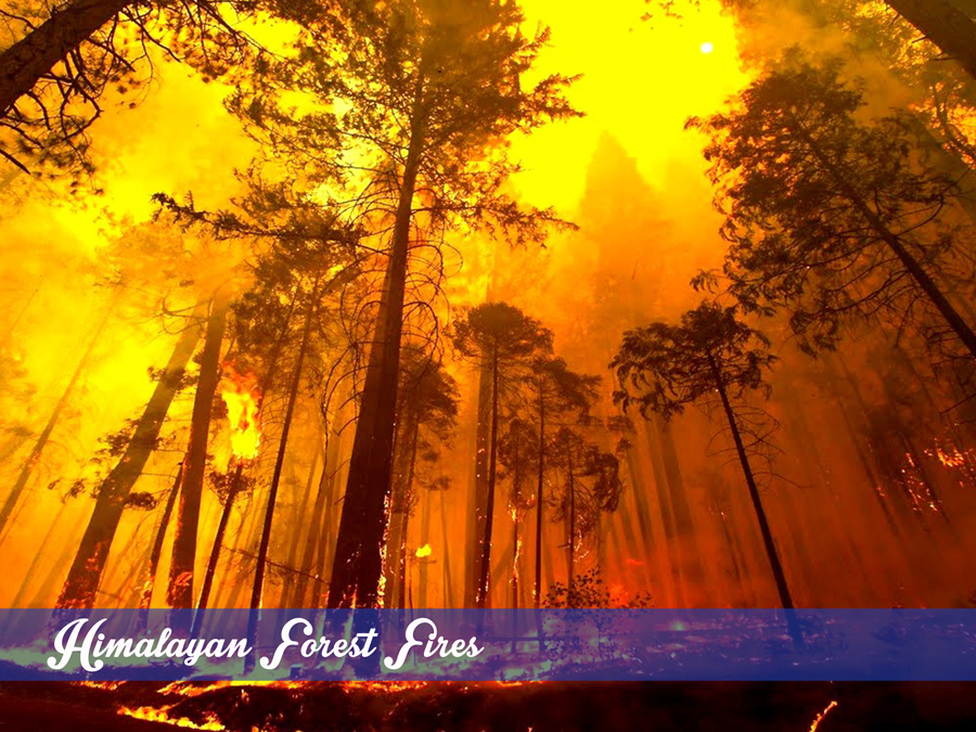 Himalayan Forest Fires What India Has To Learn From Us