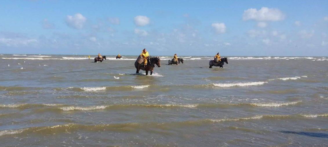 horseback shrimp fishing oostduinkerke