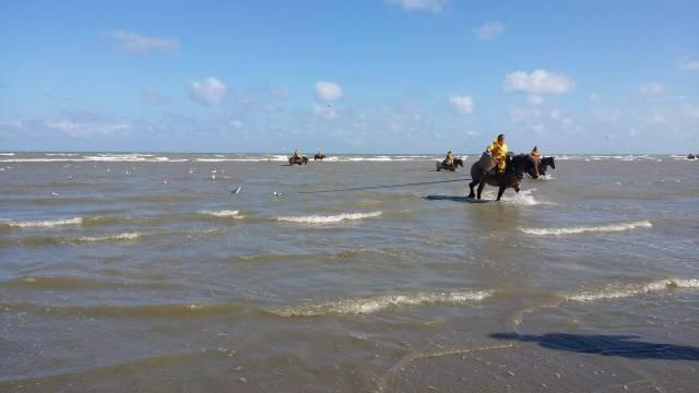 horses shrimp fishing