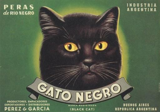 GatoNegro2