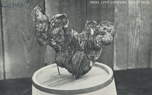 RealLiveOysters2