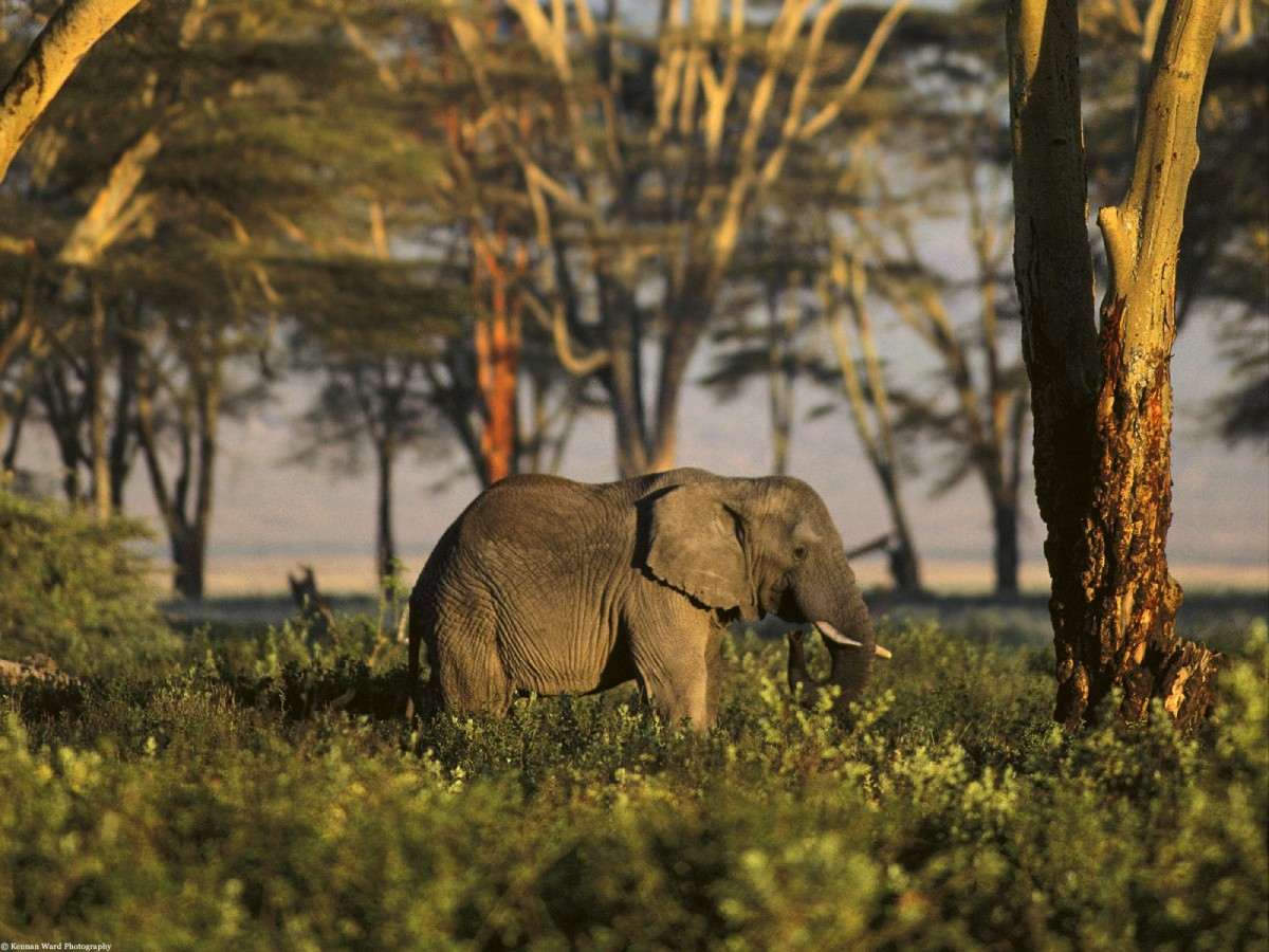 Timeless Tanzania - Elephant picture