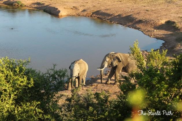 Addo Elephant Park Safari