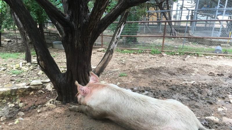 Austin Zoo Delights