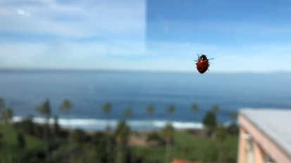 Beach adventures in San Diego