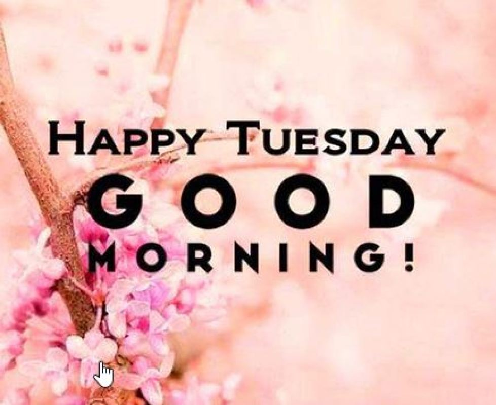 Good Morning Tuesday |Happy Tuesday Images, Wishes and Pictures – The State