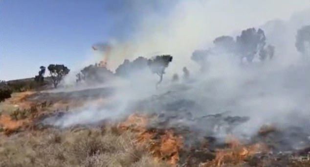 Smoke billowing over grassland and trees after the fire broke out on the East African mountain