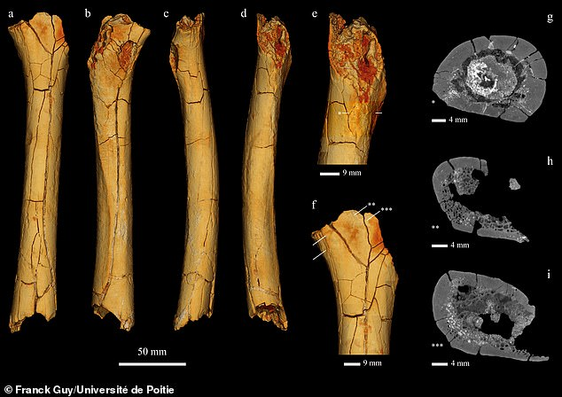 Aude Bergeret-Medina, a researcher at Poitiers, identified an unlabeled bone as Tumai's femur and said it's more typical of an ape