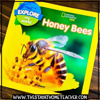 honeybee books