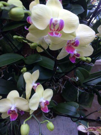 kew-orchids