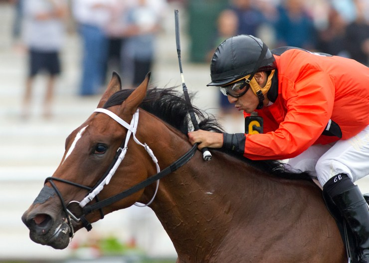 marquee_miss_four_footed_fotos