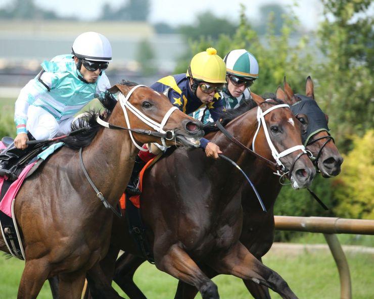 Sensitive wins Ellis Park turf stakes