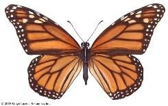 Monarch Butterfly Tiny Necklace