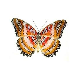 Red Lacewing Butterfly Small Circle Necklace