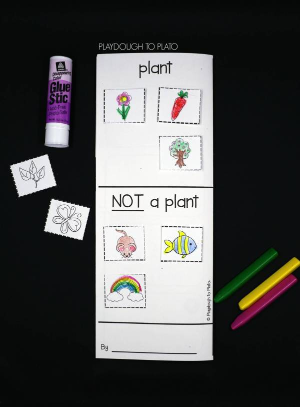Plant Life Cycle Activity