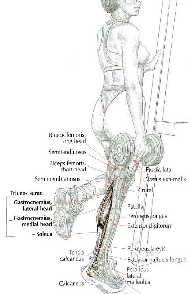 One Leg Toe Raises • THE stephane ANDRE