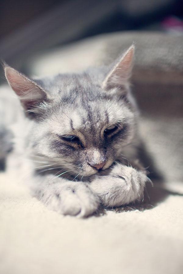 The Stoner Mom's Cat