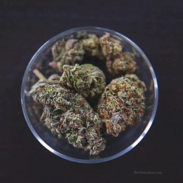 Gelato cannabis buds