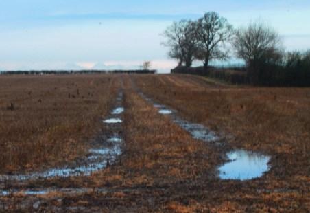 puddled tracks landscape