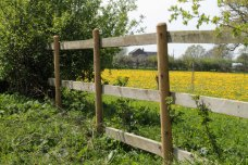 dandelion field through fence2