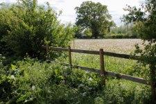 fence by wildflower meadow