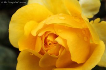 yellow rose 2 small
