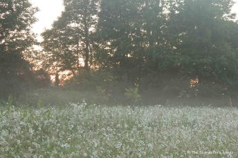 meadow at dawn
