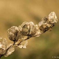Macro Moments: Nature's Filigree
