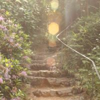 Cee's Which Way: Stairways and Sunbeams