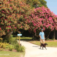 FFfAW: A Walk in the Park