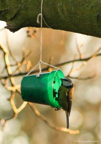 blue-tit-on-feeder-3