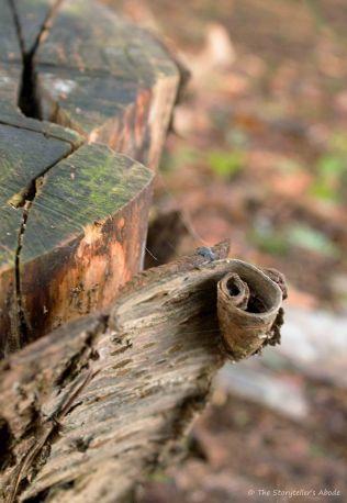 curl-of-tree-bark