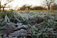 frosty-meadow