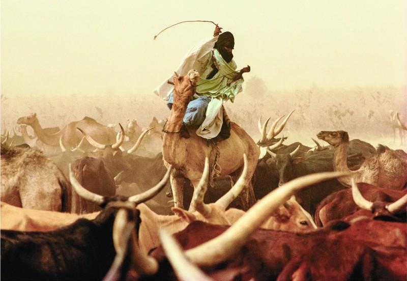 A modern Amazigh (Berber) herdsman