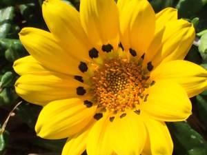 Roadside wildflower Ostia Lido