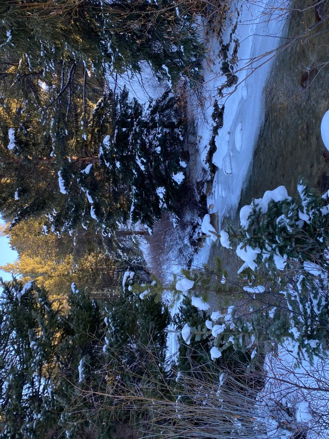 Stress reducing picture of stream and trees in winter.