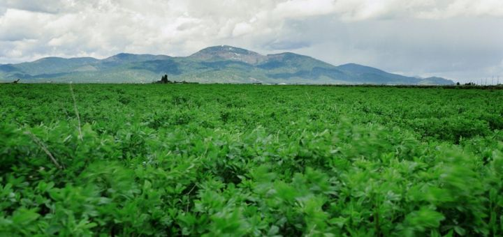 rathdrum mint fields