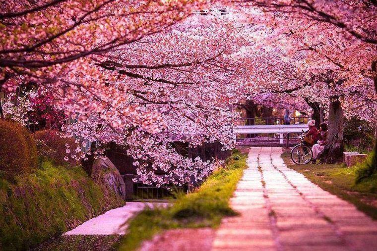 Hanami- Cherry Blossoms