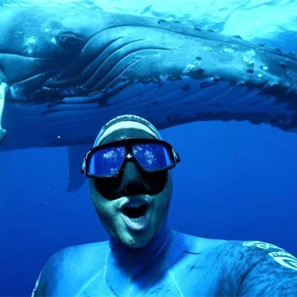 Top 19 Best Whale Watching Places In The World